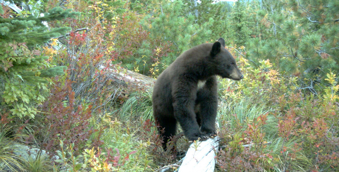 Trail users are encouraged to safely enjoy and share Idaho's trails with wildlife